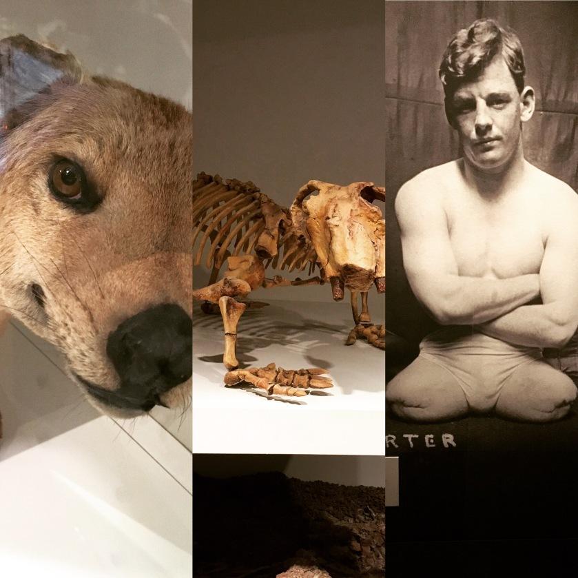 museum-collage